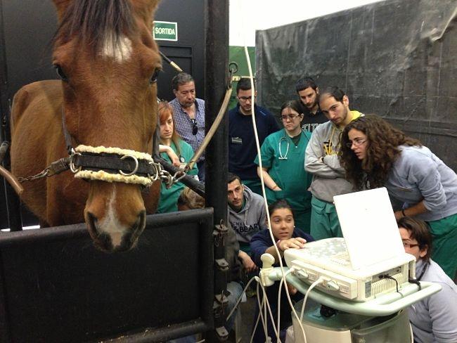 EPTE® aplicación en veterinaria