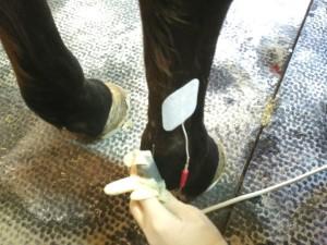 Electrodo para el tratamiento con Electrólisis percutánea Terapéutica EPTE en caballos