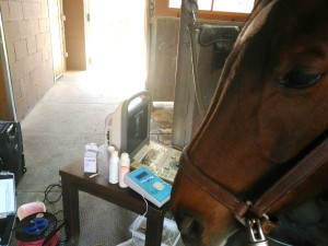 Tratamiento de caballos con EPTE Electrólisis Percutánea Terapéutica