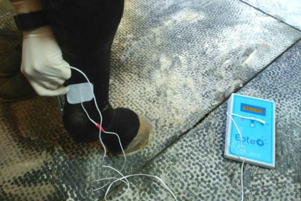 Tratamiento EPTE en caballos