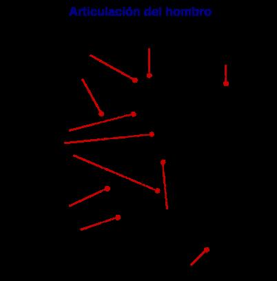 El hombro y las patologías tendinosas: tendinopatía del supraespinoso