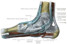 achilles tendon tendinopathy